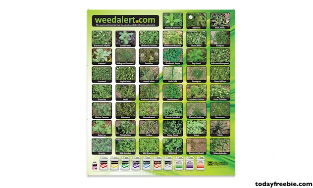 Where to get free weed samples